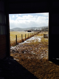 View from the girls' run in barn.