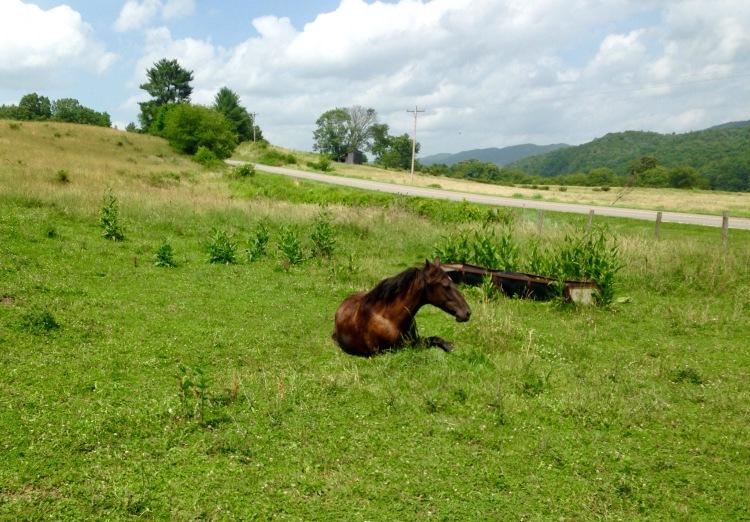 Khaleesi rolls and takes a break after her longest trail ride thus far