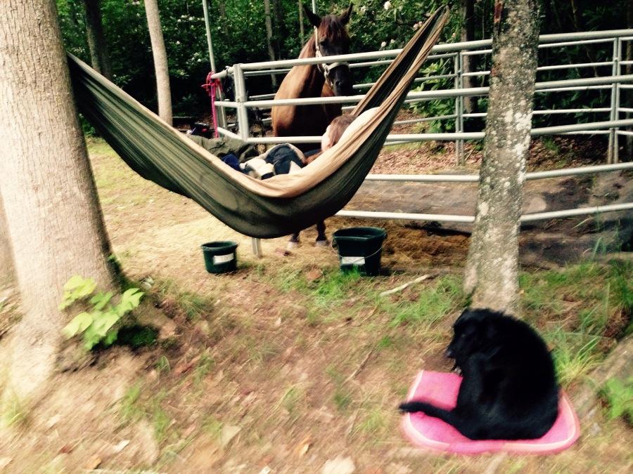 A horse, a dog and ahammock…