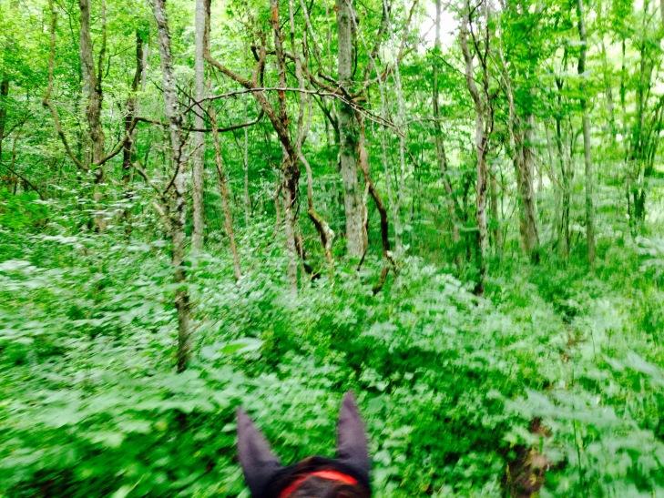 Pretty spot along the River trail