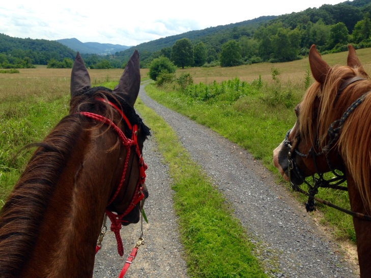 Khaleesi and Tex riding side by side happily!