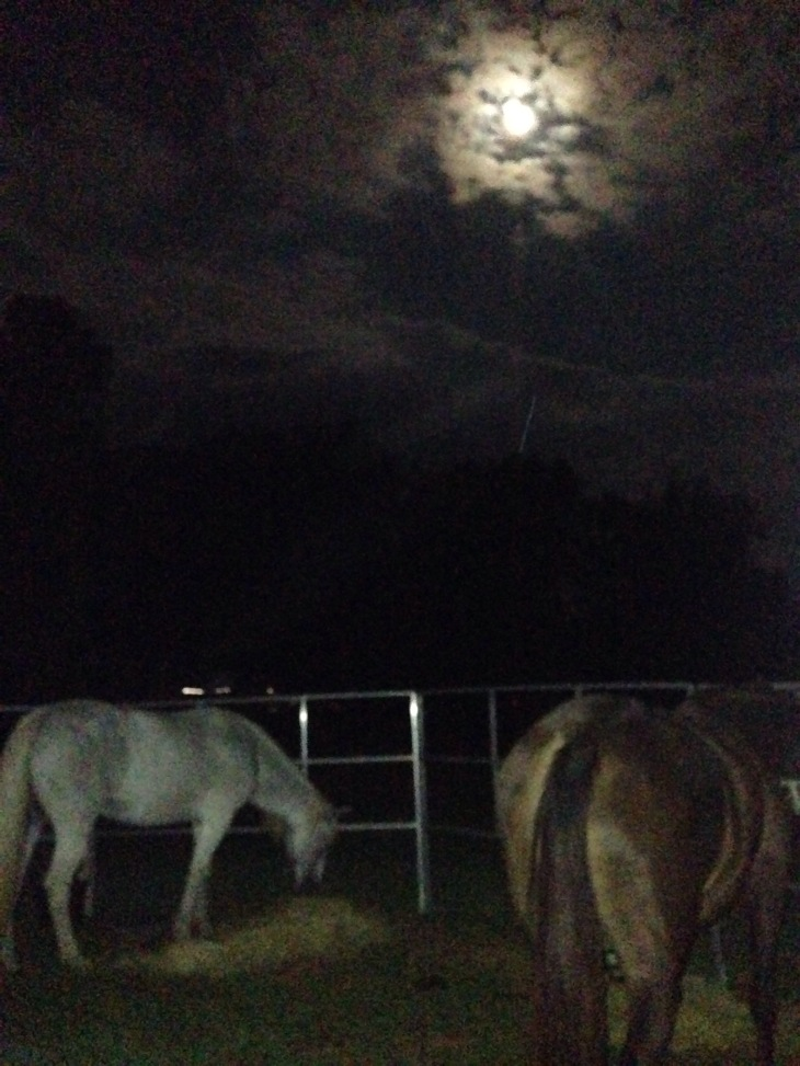 moon over the horses