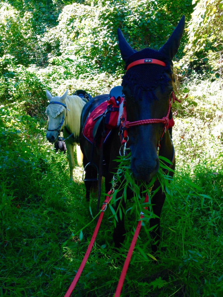 Had to get off to cut some briars on an overgrown section of our usual trail. She was helping put patient as we cut.