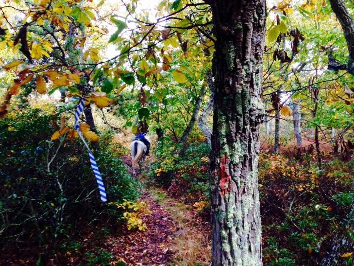 Pretty fall trails at the OD