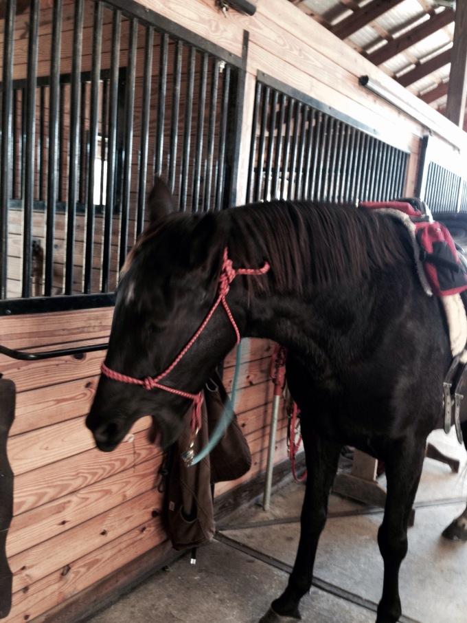 what Khaleesi thinks about saddle fitting.