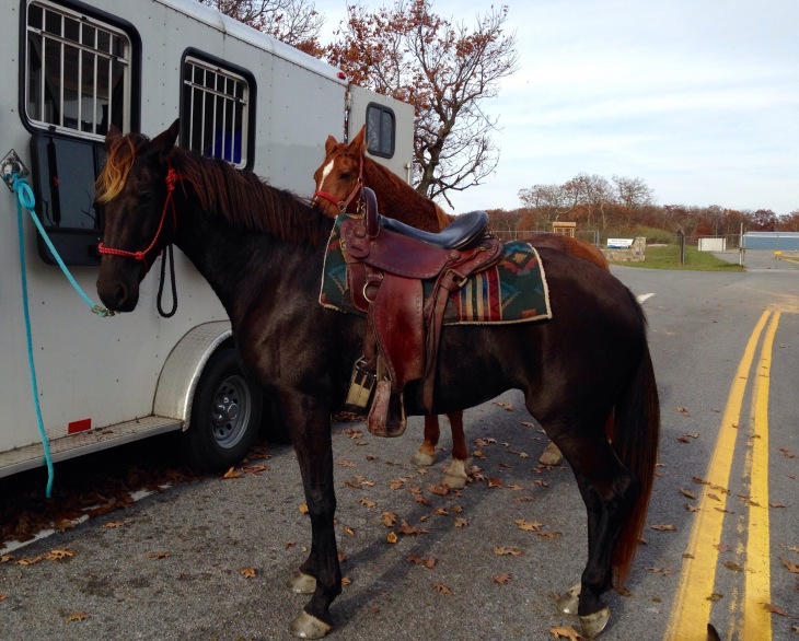 Imus 4beat saddle: getting tacked up near the airport