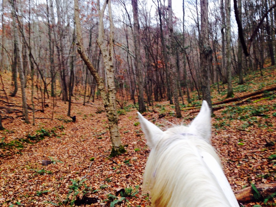The Seasons Change… Pacing and Barn Sour Horses