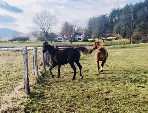 My herd!