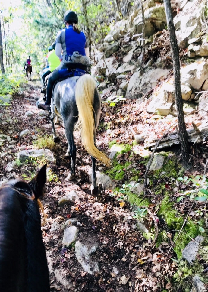 Endurance trail riding – green to 100
